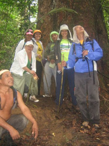 walk in the forest macapa ap. bresil