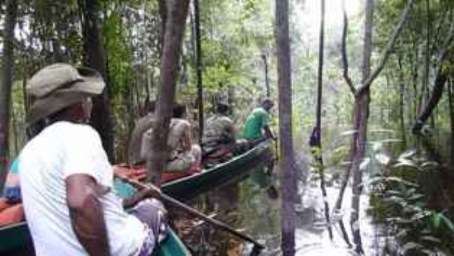 remando canoa flooded forest